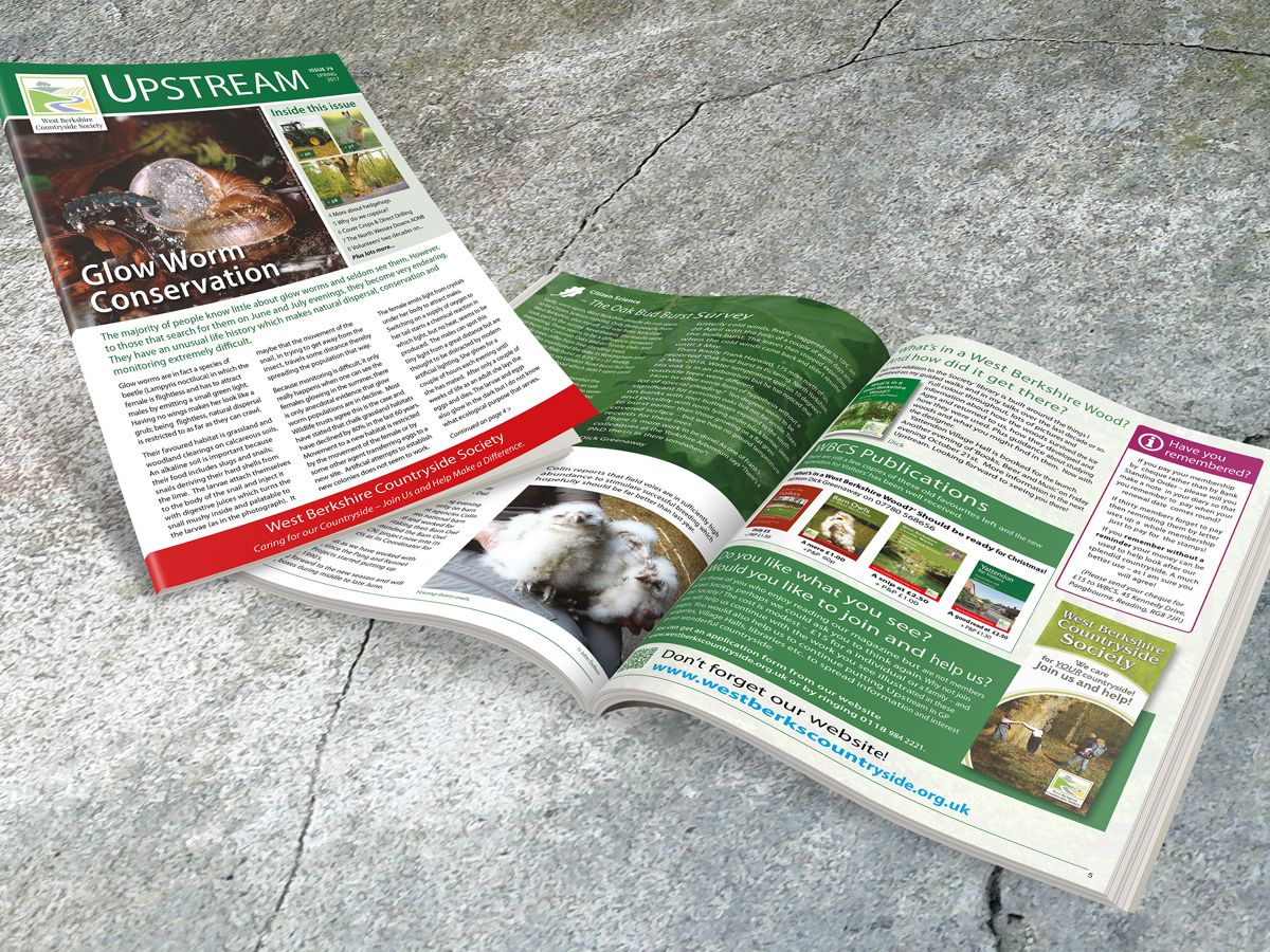 Newsletter and Magazine Design